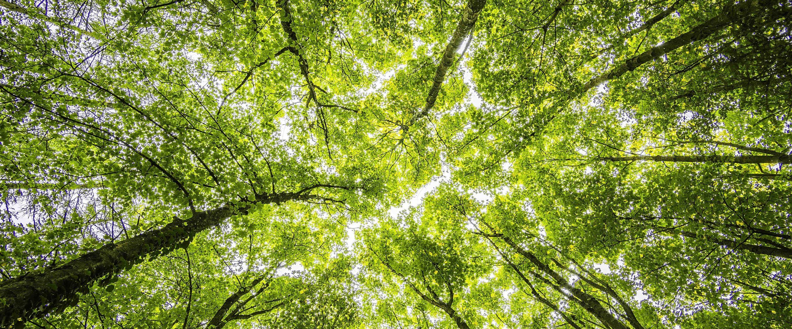 2021: El año de la restauración ecológica