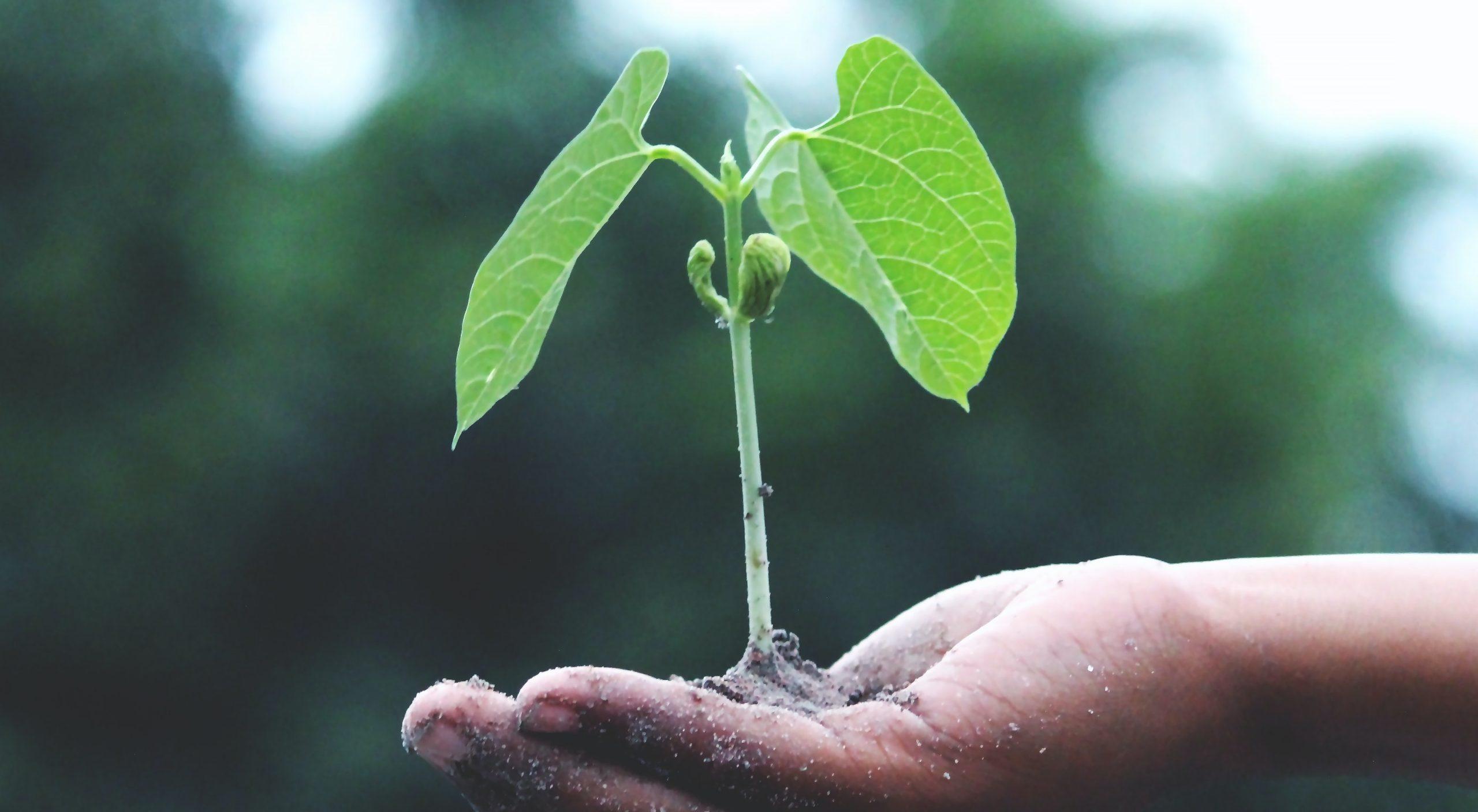 Según la ONU, existe una urgencia de prevenir, detener y revertir la degradación de los ecosistemas en todo el mundo.