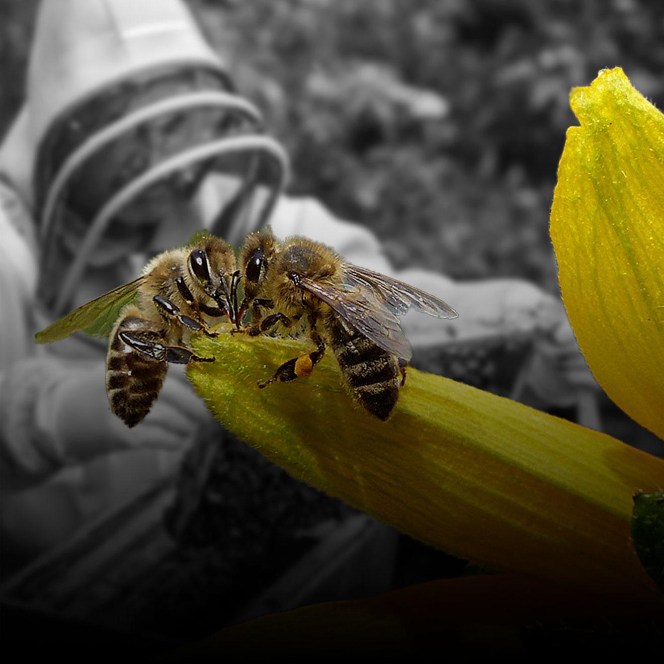 El cambio climático, el uso de agropesticidas y la tala de árboles han afectado a la población de abejas en el mundo, lo que puede resultar muy perjudicial para nuestro ecosistema. Sol y Miel es un emprendimiento que trabaja comercializando miel y creando conciencia sobre la relevancia de las abejas para nosotros y nuestro planeta.