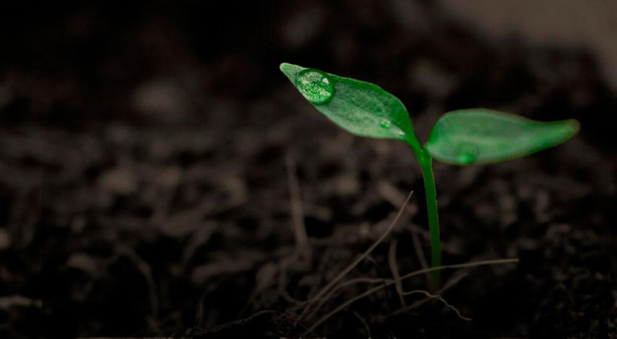 La regeneración ecológica es una de las principales herramientas para revertir la actual crisis climática y desde el año pasado, Tremün trabaja con bombas de semillas para reforestar territorios e incentivar una vida más verde.